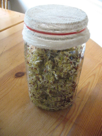 broccoli_sprouts_jar-cheesecloth-8