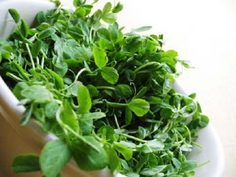 peat-sprouts_fresh-22