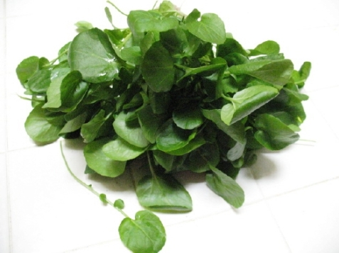 watercress-28
