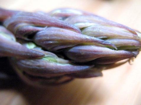 asparagas_purple-26