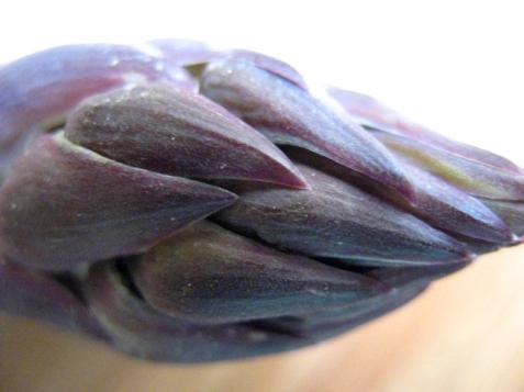 asparagas_purple-27