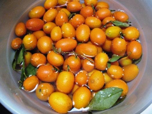 http://poxacuatl.files.wordpress.com/2009/04/kumquats_bowl-copy.jpg