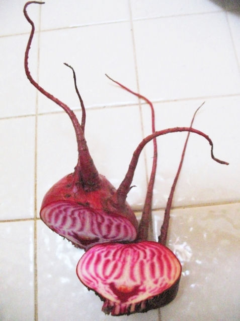Beets_chioggia-candy-striped (3)