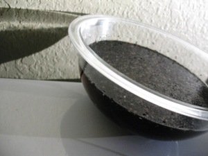 black_sesame_1-C_soak (5)